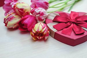 Papéis de parede Tulipas Dia dos Namorados Flores
