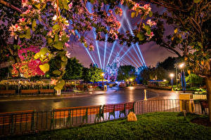 Image USA Parks Disneyland Roads California Anaheim Night time Design Street lights Rays of light Fence Nature