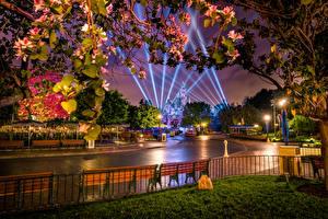 Image USA Parks Disneyland Roads California Anaheim Night time Design Street lights Rays of light Fence Nature