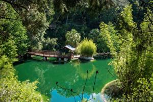 Hintergrundbilder Vereinigte Staaten Park See Bootssteg Florida Strauch Cedar Lakes Woods and Gardens Natur