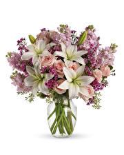 Fotos Blumensträuße Lilien Rose Levkojen Weißer hintergrund Blüte