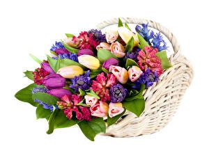 Bilder Sträuße Tulpen Hyazinthen Weißer hintergrund Weidenkorb Blumen