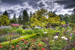 Hintergrundbilder Kanada Garten Rosen Vancouver HDRI Strauch VanDusen Botanical Garden Natur