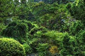 Fotos Kanada Park Strauch Bäume Butchart Gardens Victoria Natur