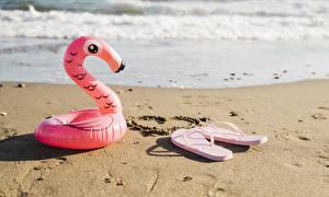 Bilder Küste Flamingos Flipflop Sand Herz