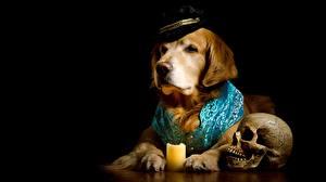 Bilder Hunde Golden Retriever Schädel Schwarzer Hintergrund Der Hut