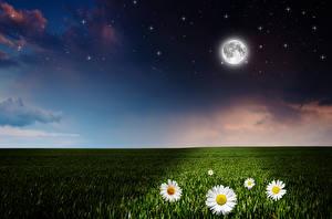 Wallpaper Fields Camomiles Sky Stars Night Moon Nature