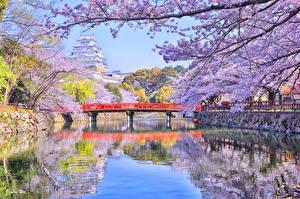 壁纸、、日本、東京都、川、橋、春、花の咲く木、自然