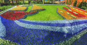 Bilder Niederlande Park Hyazinthen Tulpen Rasen Design Keukenhof Natur