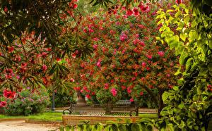 Fotos Spanien Garten Blühende Bäume Bank (Möbel) Ast Seville Maria Luisa Park Natur