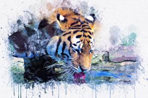 Bilder Tiger Malerei Gezeichnet Trinkt Wasser Tiere