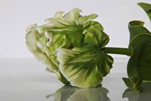 Fotos Tulpen Hautnah Blüte