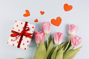 Papéis de parede Tulipas Dia dos Namorados Fundo cinza Cor-de-rosa Coração Presentes Flores