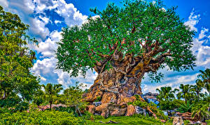 Photo USA Disneyland Parks California Anaheim Design Trees HDRI Nature