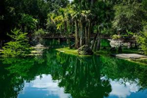 Bilder Vereinigte Staaten Park Teich Brücken Florida Palmen Cedar Lakes Woods and Gardens Natur