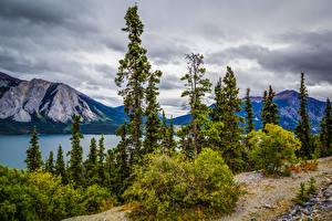 Fotos Alaska Gebirge See Strauch Bäume Tutshi Lake Natur