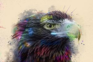 Sfondi desktop Uccelli Accipitrini Rostro Colpo d'occhio by 0l-Fox-l0