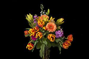 Fotos Sträuße Tulpen Gerbera Levkojen Schwarzer Hintergrund Blumen