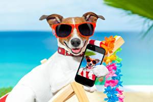 Fondos de escritorio Perro Jack Russell Terrier Teléfono inteligente Lentes Contacto visual Animalia