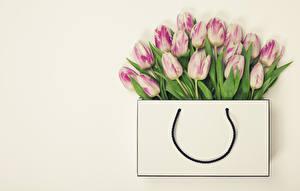 Bilder Handtasche Tulpen Viel Farbigen hintergrund Blüte