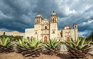 Bilder Mexiko Tempel Kirche Kakteen Santo Domingo Oaxaca Städte