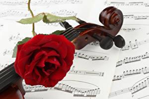 Hintergrundbilder Noten Rose Hautnah Violine Rot Blüte