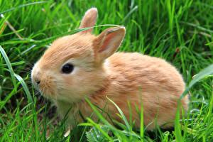 Обои Кролики Траве животное
