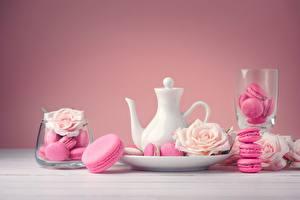 Bilder Rosen Pfeifkessel Macaron