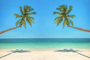Hintergrundbilder Tropen Meer Küste Palmen Horizont