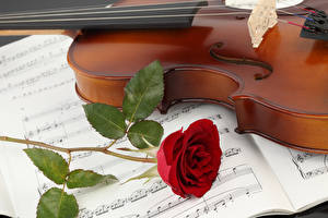 Hintergrundbilder Violine Noten Rose Rot Blüte