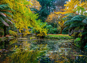 Fotos Australien Park Herbst Teich Brücken Bäume Alfred Nicholas Memorial Gardens Natur