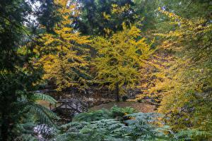 Fotos Australien Park Herbst Teich Brücken Bäume Alfred Nicholas Memorial Gardens