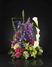Fotos Sträuße Rosen Orchideen Calla palustris Schwertlilien Levkojen