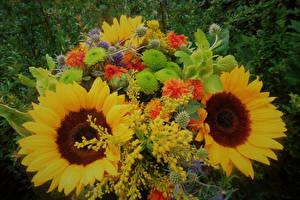 Bilder Sträuße Sonnenblumen Blumen