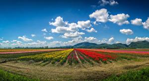 Fotos Kanada Landschaftsfotografie Acker Tulpen Himmel Vancouver Wolke Hügel Natur