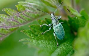 Hintergrundbilder Hautnah Makrofotografie Käfer Tiere