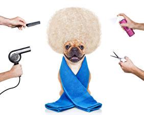 Fotos Hunde Kreativ Handtuch Weißer hintergrund Bulldogge Haar Hand