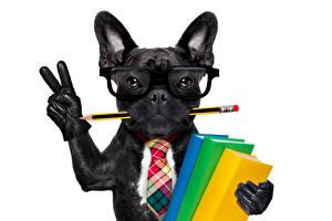Photo Dog French Bulldog Fingers White background Black Eyeglasses Pencils Books Necktie Glove Funny