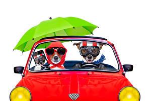 Fondos de escritorio Perro El fondo blanco Dos Jack Russell Terrier Lentes Paraguas Teléfonos inteligentes Divertido Animalia