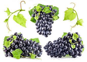 Bilder Weintraube Weißer hintergrund Ast Drei 3 Lebensmittel