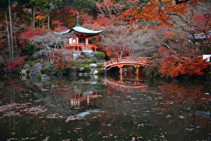 デスクトップの壁紙、、日本、京都市、秋、公園、池、橋、パゴダ、自然