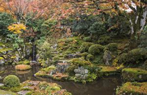 デスクトップの壁紙、、日本、京都市、公園、秋、池、蘚類、低木、木の葉、自然