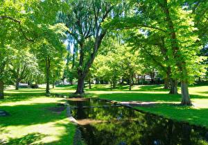 Fotos Japan Park Teich Bäume Rasen Garden in the Hokkaido University