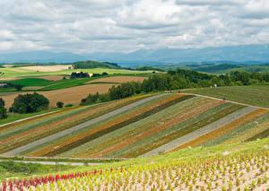 Fotos Japan Landschaftsfotografie Felder Himmel Hokkaido Natur
