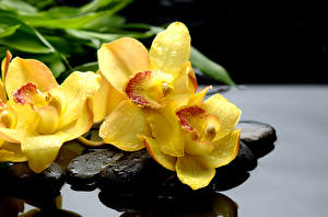 Image Orchid Stones Closeup Yellow Drops Flowers