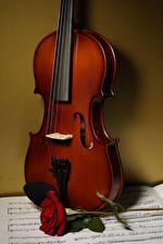 Bilder Rose Violine Noten Blumen