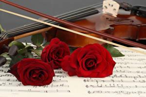 Fotos Rose Violine Noten Drei 3 Rot Blumen