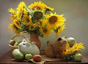Fotos Stillleben Hausmeerschweinchen Sonnenblumen Äpfel 2 Tiere Blumen