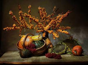 Bilder Stillleben Kürbisse Beere Mehlbeeren Sonnenblumen Weidenkorb Ast Lebensmittel Lebensmittel