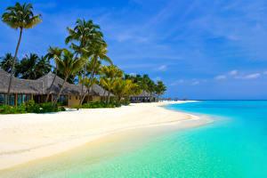 Hintergrundbilder Tropen Küste Gebäude Palmen Strände Bungalow Natur